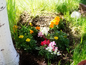 Marigolds and Snap Dragon Planted Area