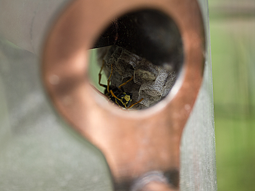 Wasp making its home in one of my bird feeders.