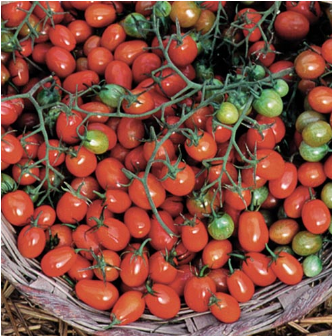 Cherry Roma seed packet
